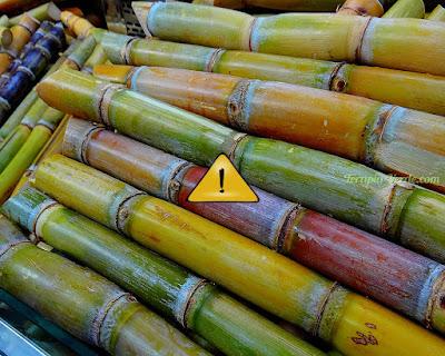 Contraindicações da Cana-de-açúcar