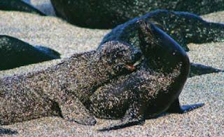 reservas-marinas-parque-nacional-galapagos