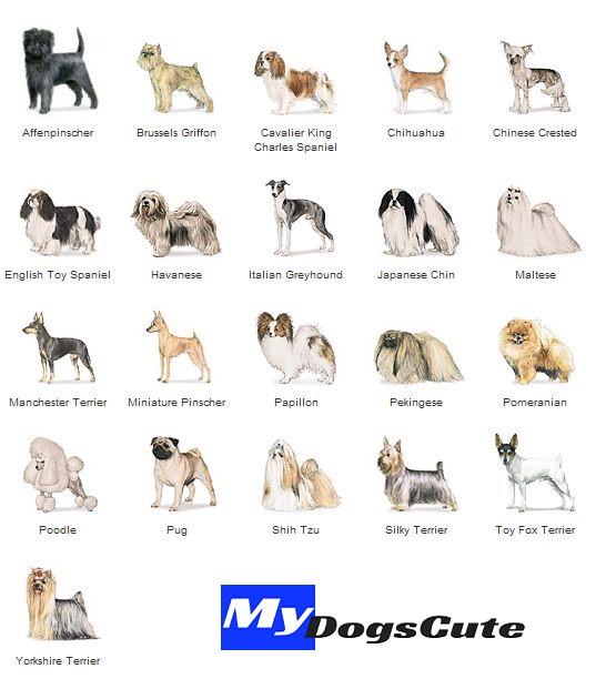 Hypoallergenic dogs breeds