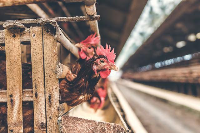 Bird Flu New Form   Virus