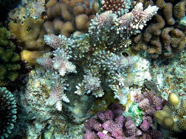 Kingdom of coral lies beneath Vinh Hy Bay 6