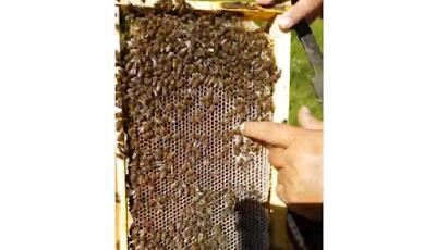 Επιθεώρηση μελισσιού στα έλατα 2017