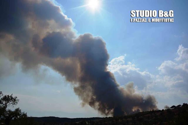 Πυρκαγιά στην περιοχή Δάρδιζα Ερμιονίδας στην Αργολίδα