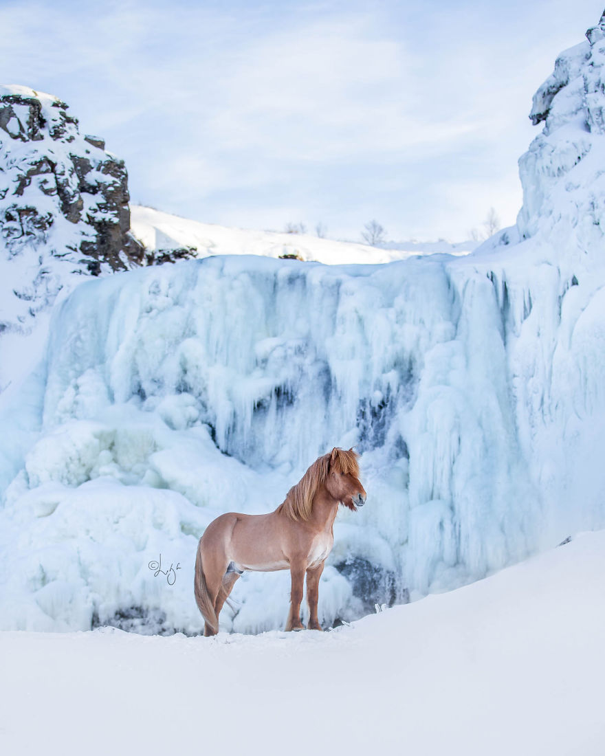 Photos Of Icelandic Horses