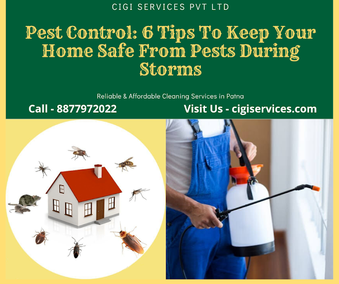 Pest Control: 6 Tips To Keep Your Home Safe From Pests During Storms