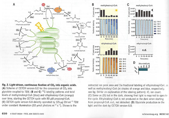Adapting principles of photosynthesis to artificial ways of fixing CO2 (Source: T. Miller, et al, Science, 8 May 2020)