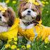 Μπορεί ο σκύλος να μυρίσει λουλούδια;
