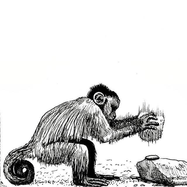 08-Bearded-Capuchin-Monkey-Tim-Rees-www-designstack-co