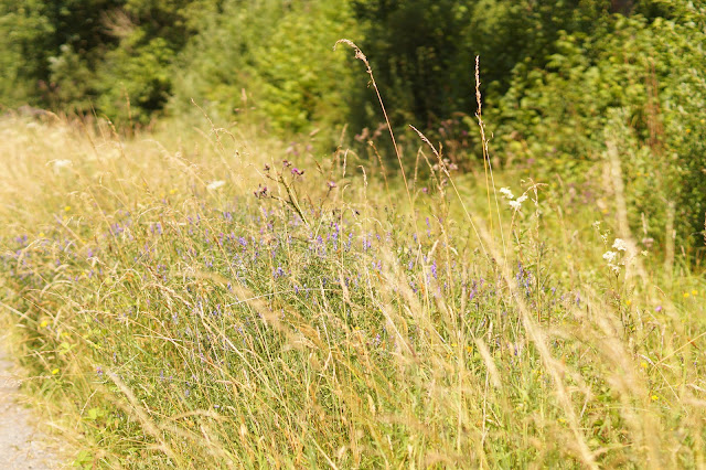 Norfolk nature paradise