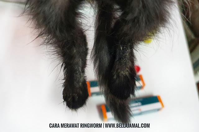 Cara Merawat Ringworm Kurap Pada Kucing Ini Adalah Bellarina Natasya