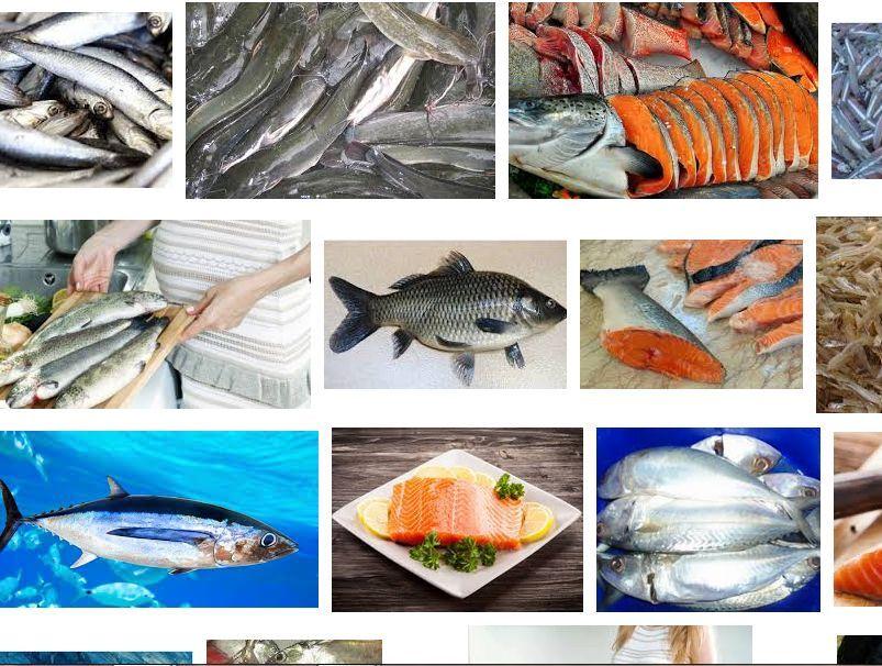 Jenis Ikan yang Baik untuk Ibu Hamil Janin dan Bayi