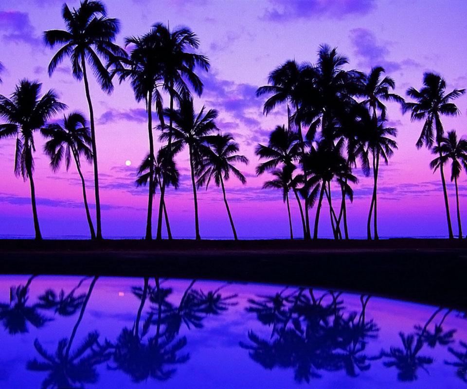 Las Fotos Mas Alucinantes Palmeras En La Playa