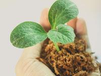 Kenali Manfaat Lebih Tanah Humus