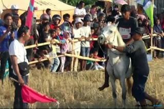 Berita Terhangat Ikuti Lomba Pacuan Kuda Tradisional, 'Kuda Jokowi' Kalah