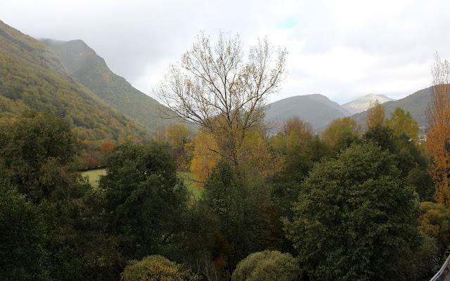 Bosque en la comarca de Laciana en León