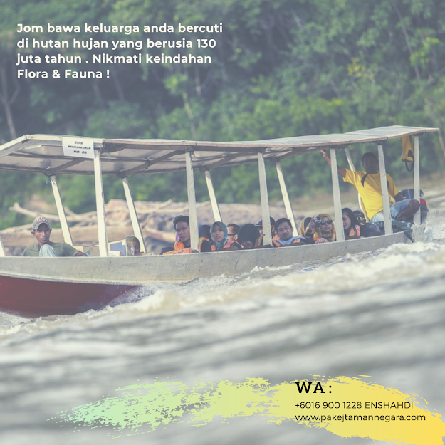 Percutian Taman Negara Pahang , Aktiviti di Taman Negara