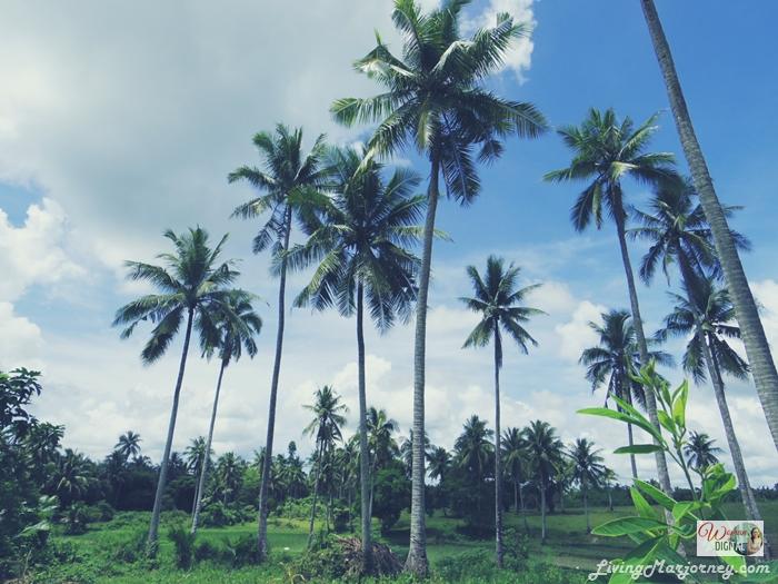 WID-Kalikasan-Organic-Farm-Albay