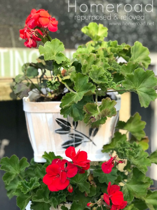 Geraniums in a DIY Tiered Tray Basket Planter.