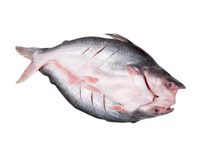 Pangasius butterfly