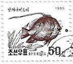 Selo Pennant Coralfish