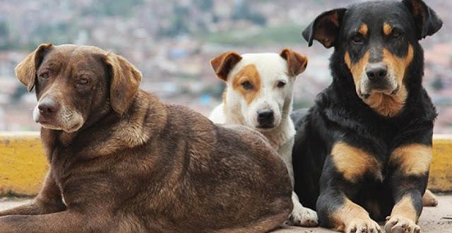 Αργολίδα: Δυο οικογένειες 30 χρόνια ταΐζουν αδέσποτα ζώα - Δεν ζήτησαν ποτέ καμία οικονομική βοήθεια