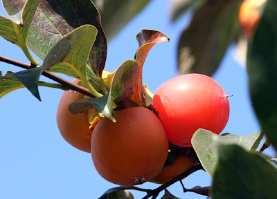 This delicious fruit is known as a ________. (image)