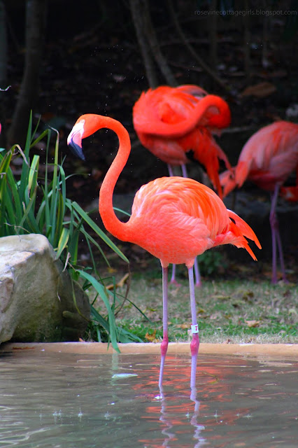 Carribean Flamingo (C) Rosevine Cottage Girls