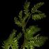 نبات إصطناعي ينتج الأكسجين