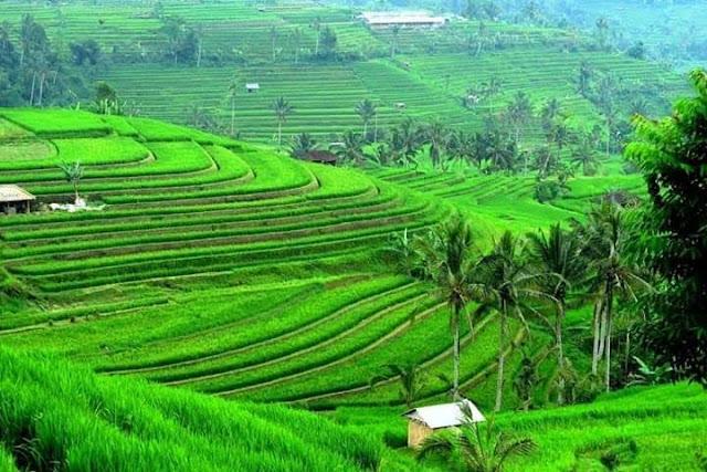 Kavling Produktif Di Jual Murah Lokasi Bandung