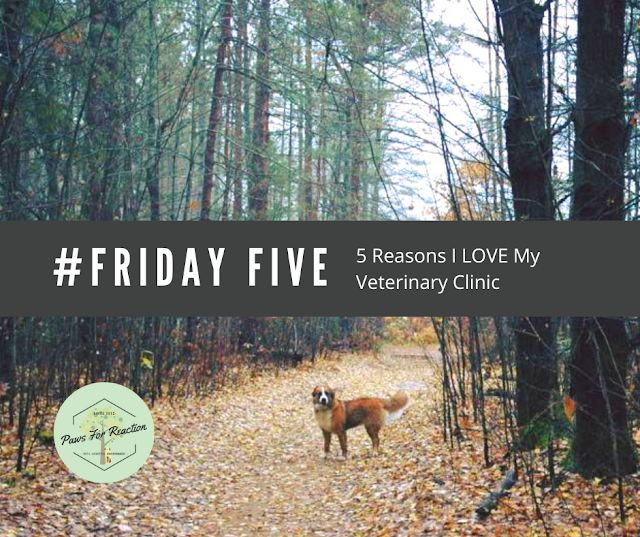 Top Five Friday: Five reasons why I love my veterinarian #FridayFive