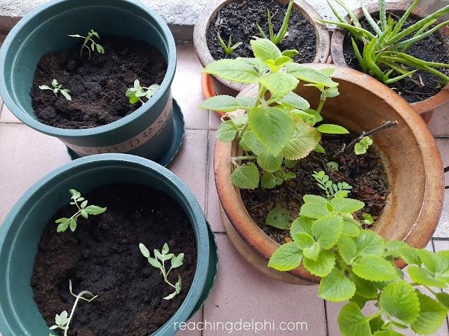 flora, seedling