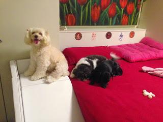 rampas ortopédicas para cães com deficiência visual
