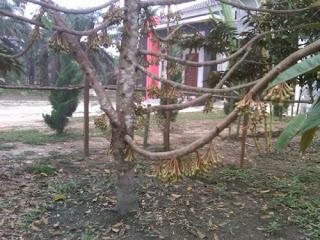 http://danahauses.blogspot.com/2016/11/tips-agar-tanaman-buah-cepat-berbunga.html