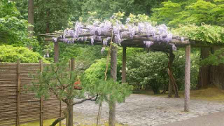 Wisteria arbor at Portland Japanese Garden