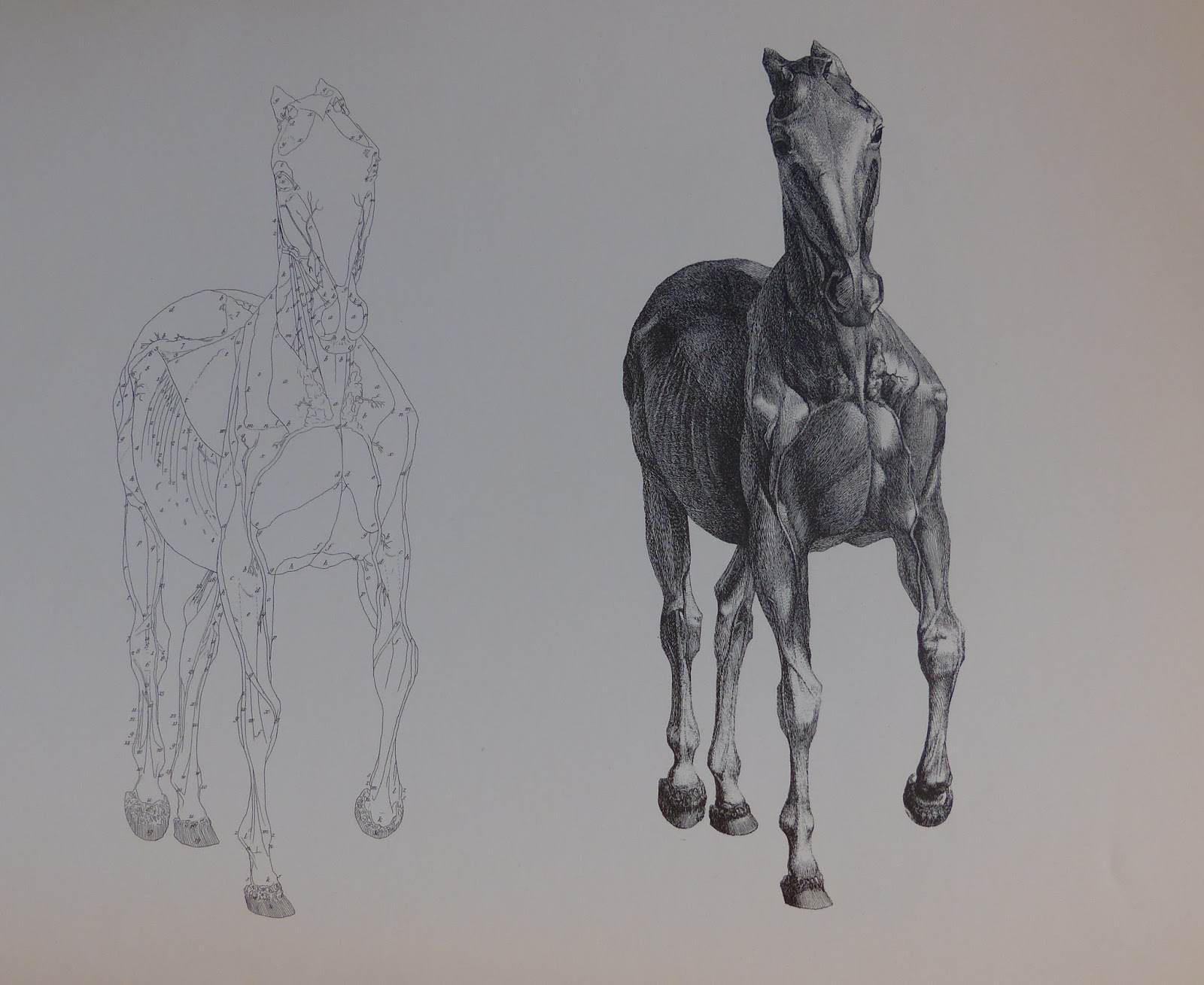 Dariusz caballeros: Stubbs - The Anatomy of the Horse