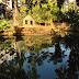reflexo na lagoa calma do Jardim Municipal