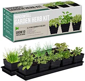 The top five Germination Kits