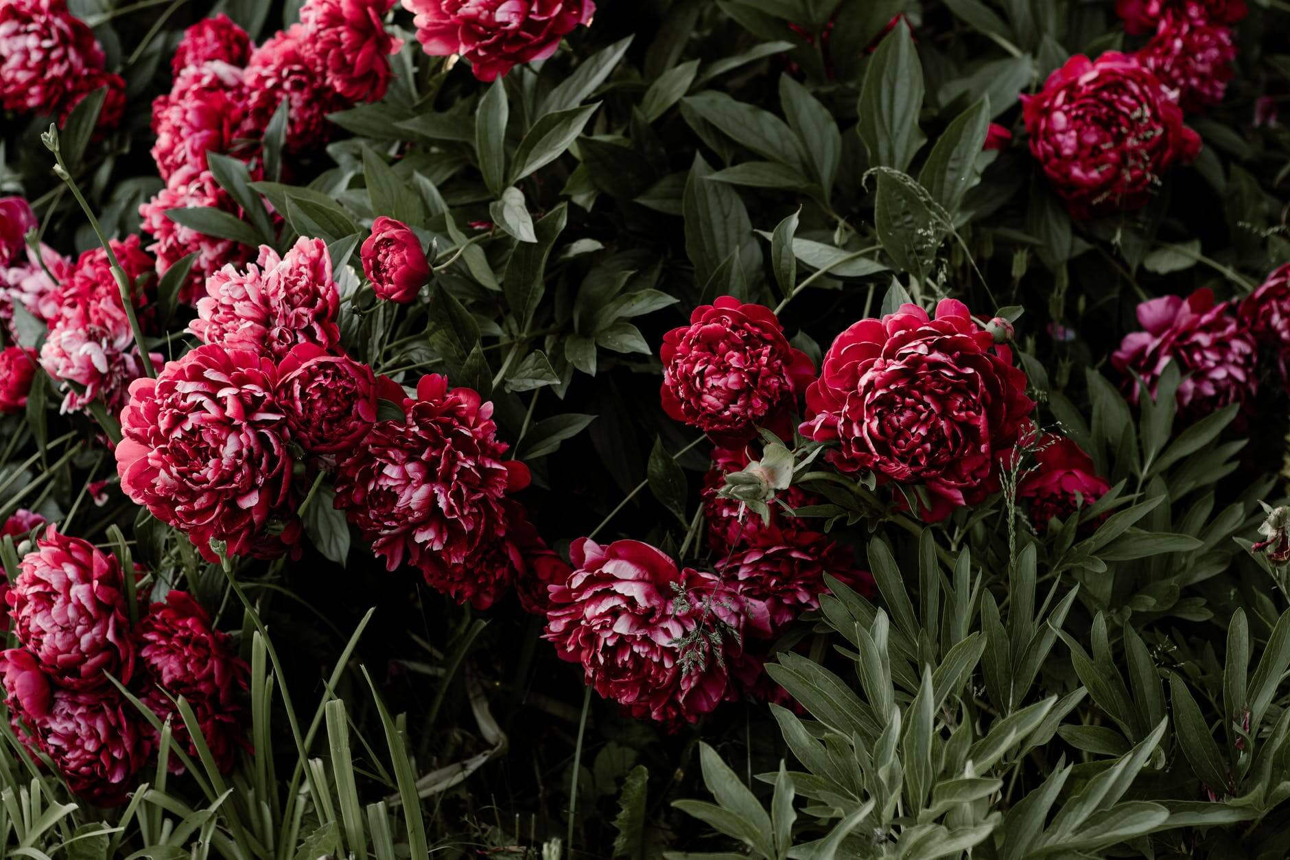 Top 5 Flowers That Are Used For Making Beauty Products
