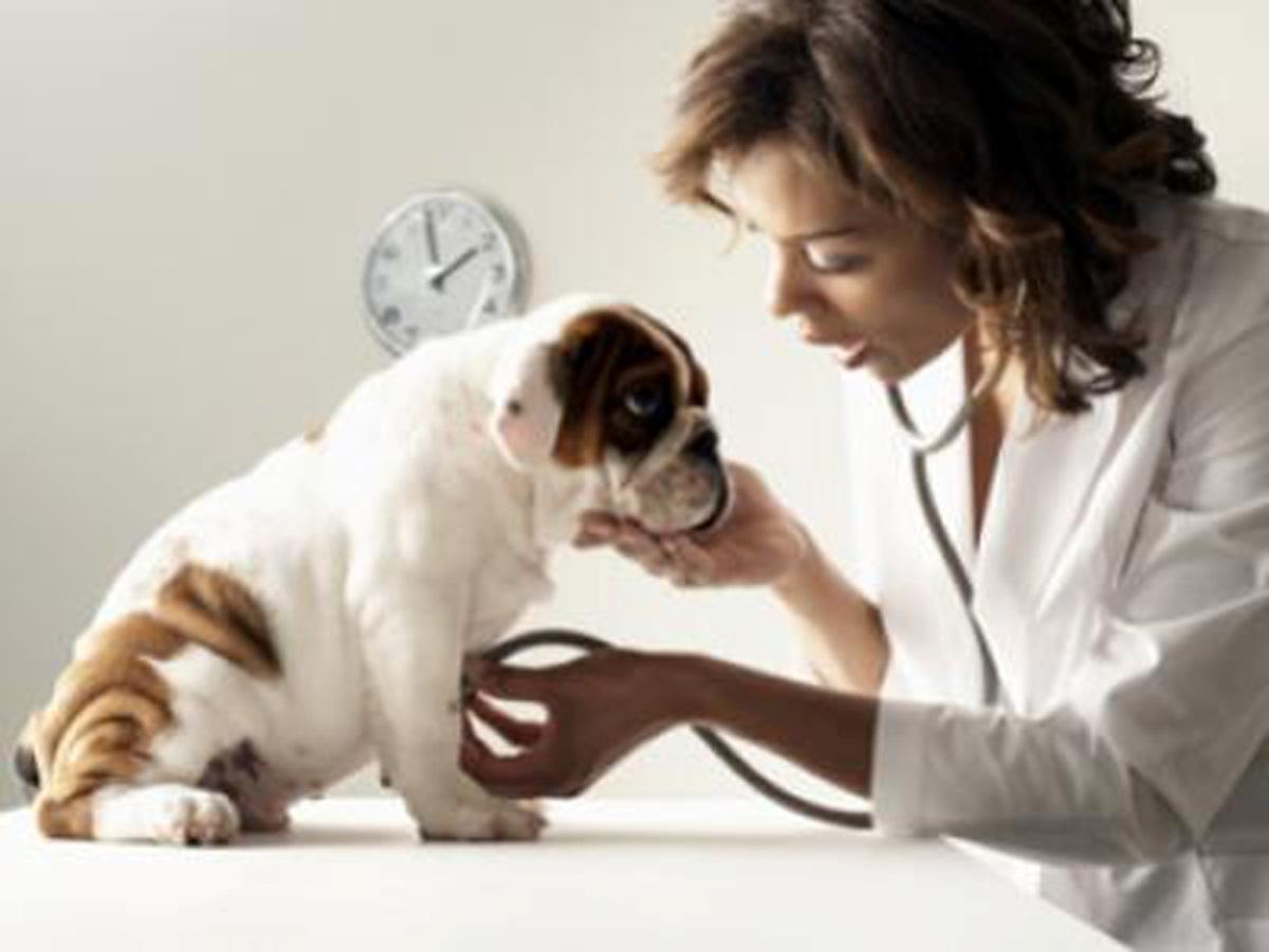 10 Cara Alami Mengatasi Batuk Pada Anjing Peliharaan