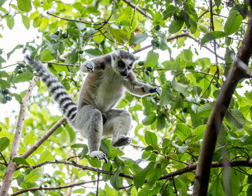 Best Wildlife and Nature Destinations