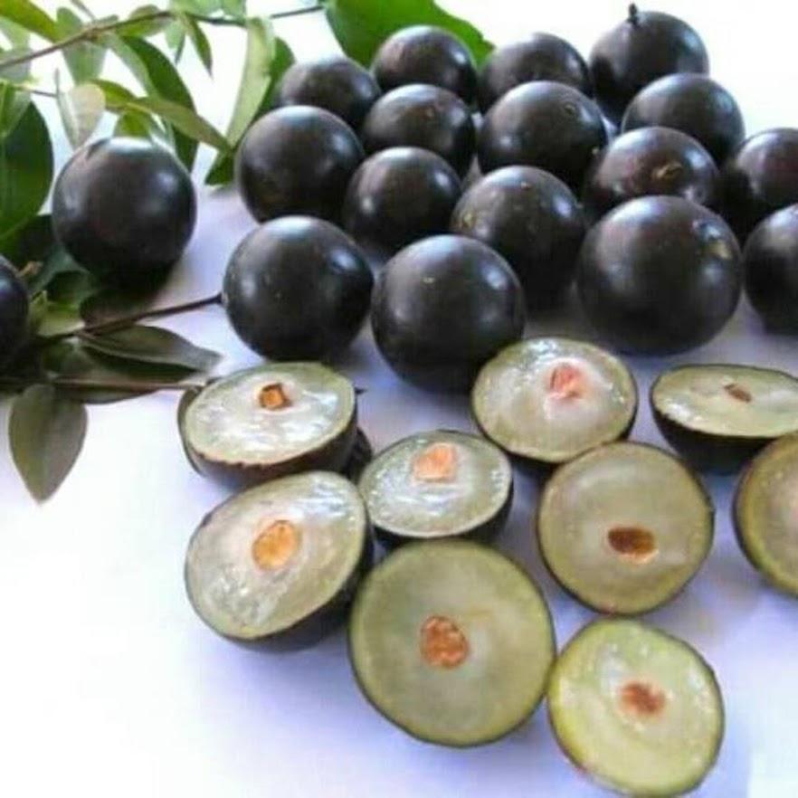 Bibit anggur brazil sabara anggur pohon Jawa Tengah
