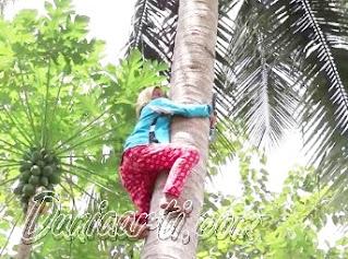 Arti Mimpi Memanjat Pohon dan Kesulitan Menurut Primbon Jawa