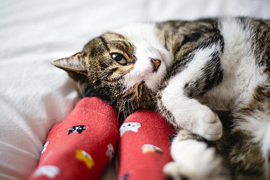 Historia udomowienia kota