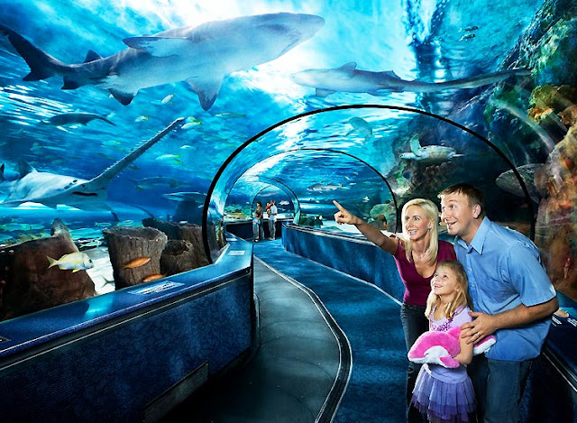Visit S.E.A Aquarium on Sentosa Island