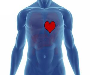 Kalp vücudun neresindedir? görevleri nelerdir?