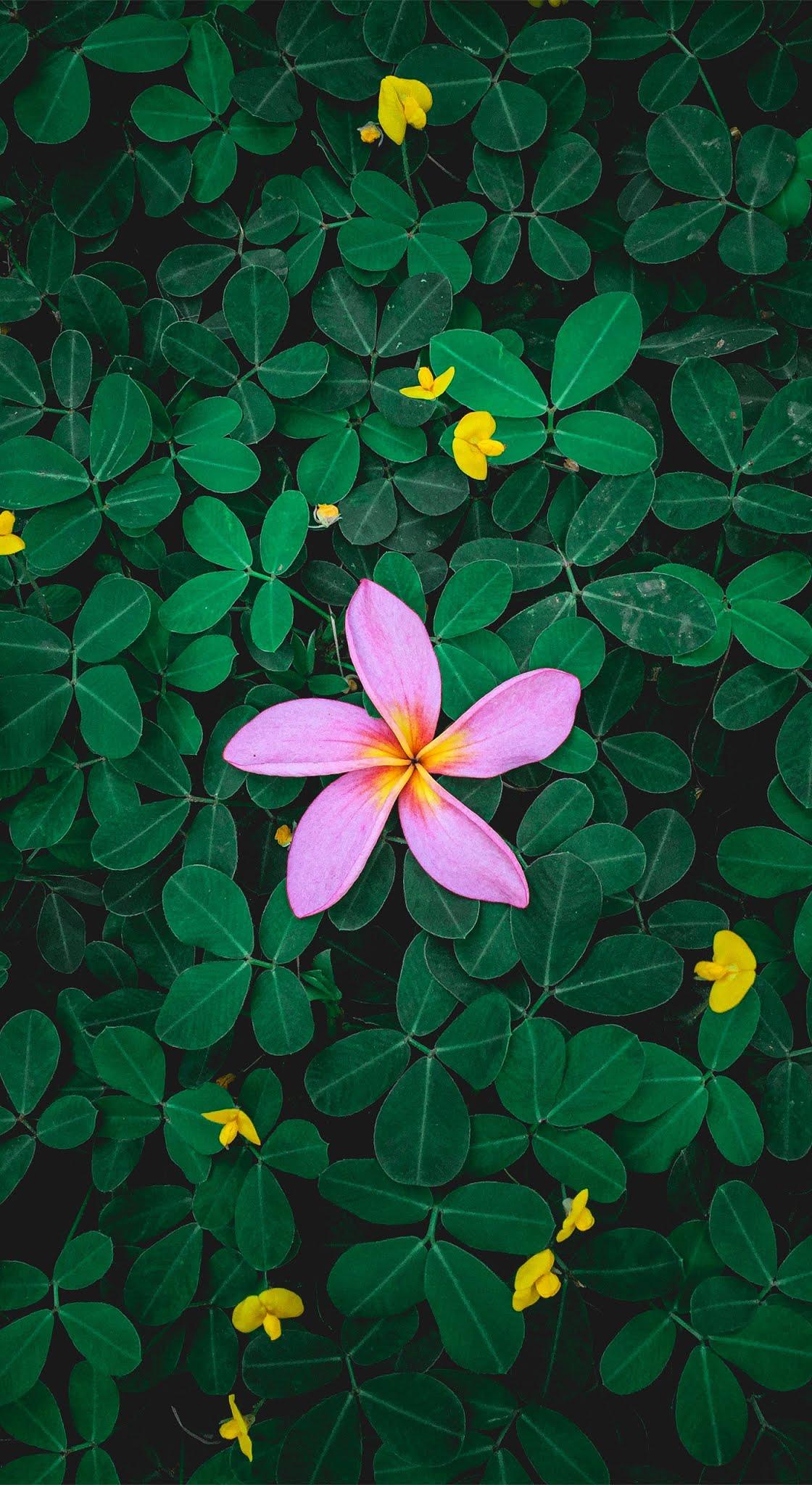 Ambiance beautiful flower