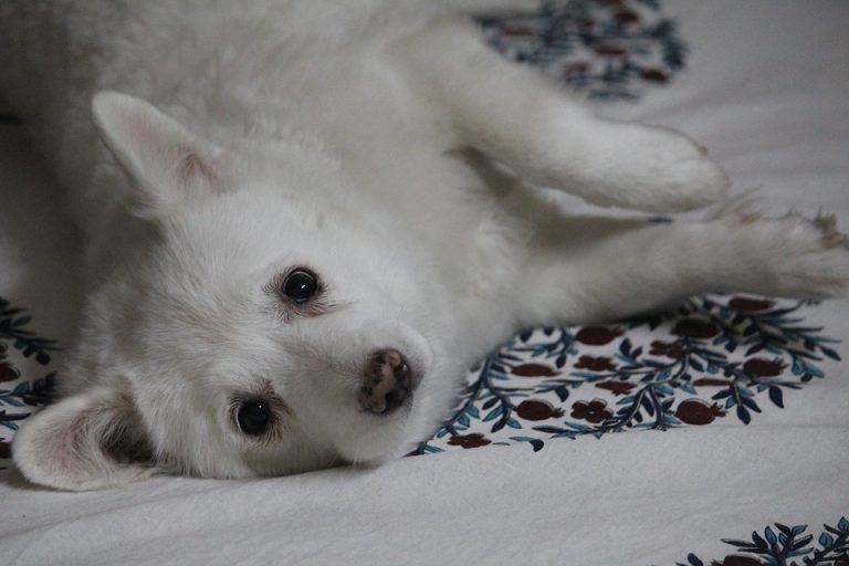 10 coisas importantes que todo dono deve saber sobre seus pets
