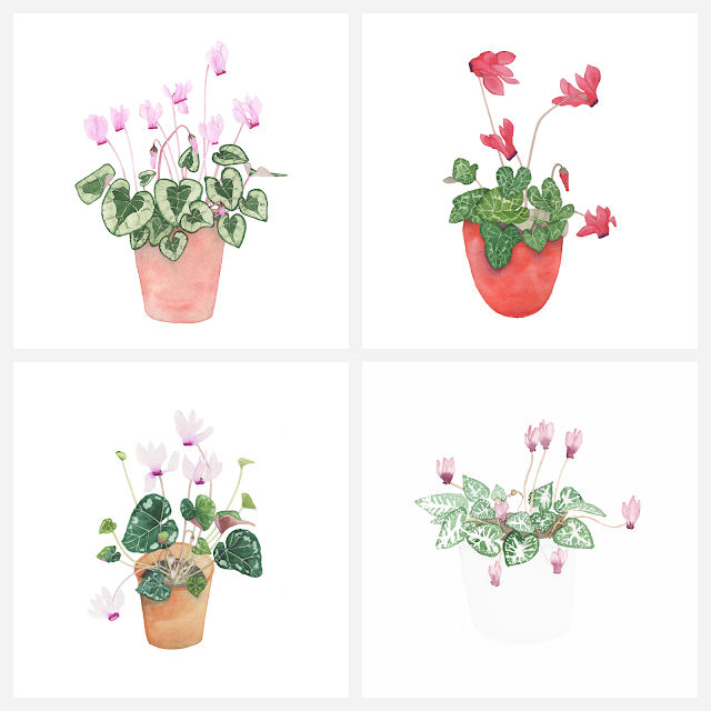 learning to paint, watercolor, cyclamen