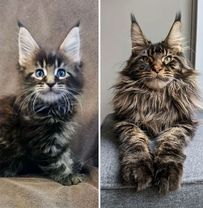 Cats who turned from ridiculous lumps into fluffy supermodels