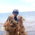 Warga Desa Tambolongan Minta Pemda Selayar Perhatikan Petani Rumput Laut